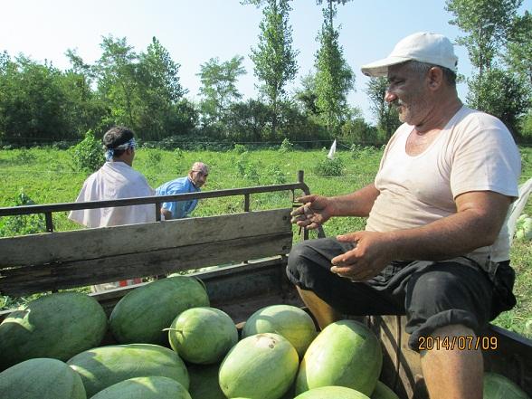 خسارت-آبگرفتگی-به-باغات-هندوانه-در-چاف